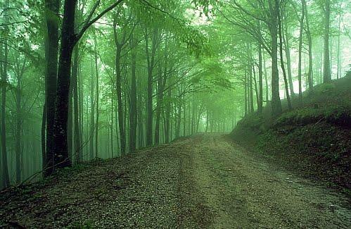 camaldoli-wood